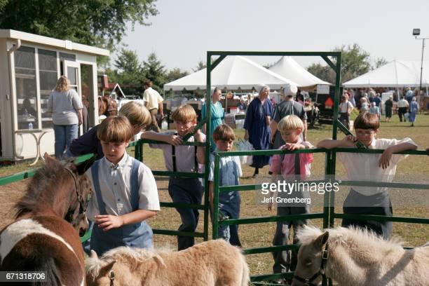 Amish boys looking at miniature ponies