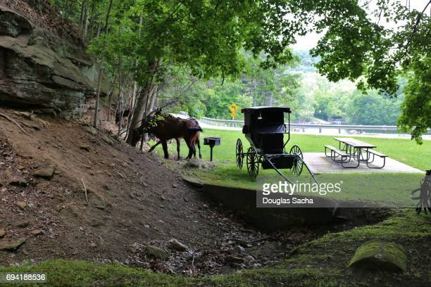 Amish carriage and horses