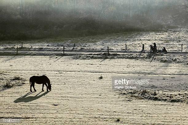 Amish farm and horses