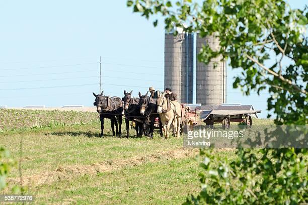 amish feno com agricultor baling equipa de plástico - mula imagens e fotografias de stock