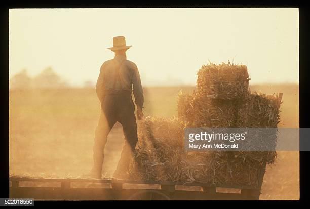 Amish Farmer Stacking Hay Bales