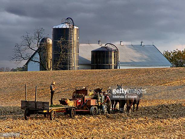 CONTENT] Amish farmers using a horsedrawn plow on hay field near Lancaster County PA Amish are descendants of SwissGerman Mennonites who fled...