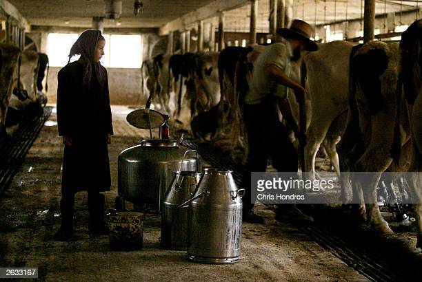 Amish girl Elizabeth Stoltzfus watches her father Daniel Stolzfus while they milk cows October 22 2003 in Wakefield Pennsylvania The Amish...