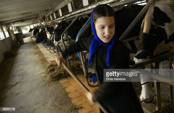 Amish girl Linda Stoltzfus rakes up hay in one of her father's barns October 22 2003 in Wakefield Pennsylvania The Amish traditionalist farmers who...