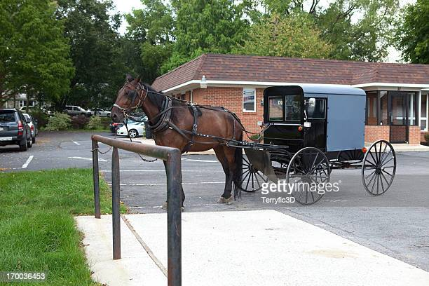 Amish Horse and Buggy in Parking Lot