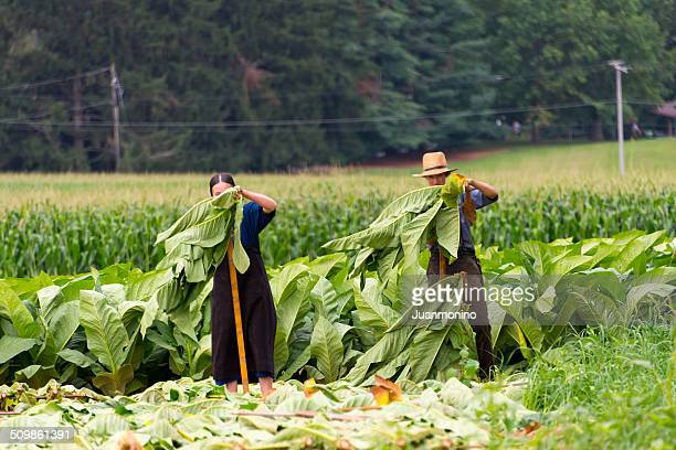 amish land - amish woman stock pictures, royalty-free photos & images