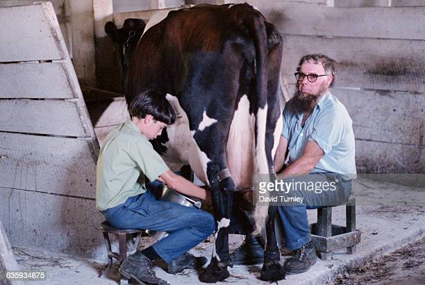 Amish Man and a Boy Milking a Cow