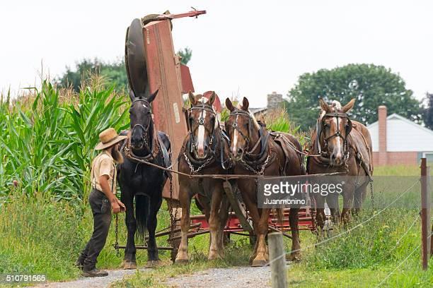 Amish Homem no trabalho no campo