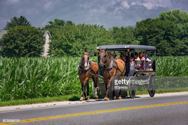 amish style transportation - animal powered vehicle stock photos and pictures