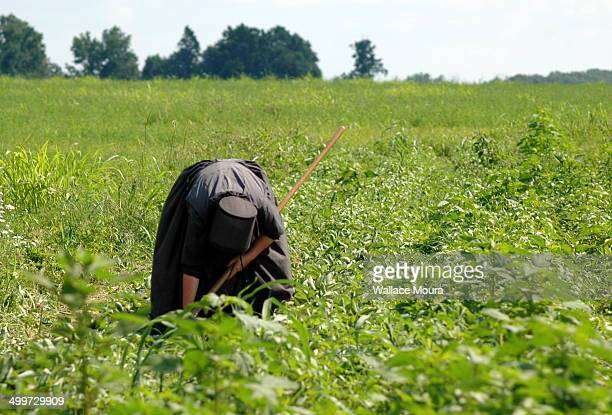 amish woman in the field - amish woman stock pictures, royalty-free photos & images
