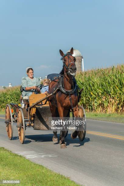 Amish woman riding in carriage on country road