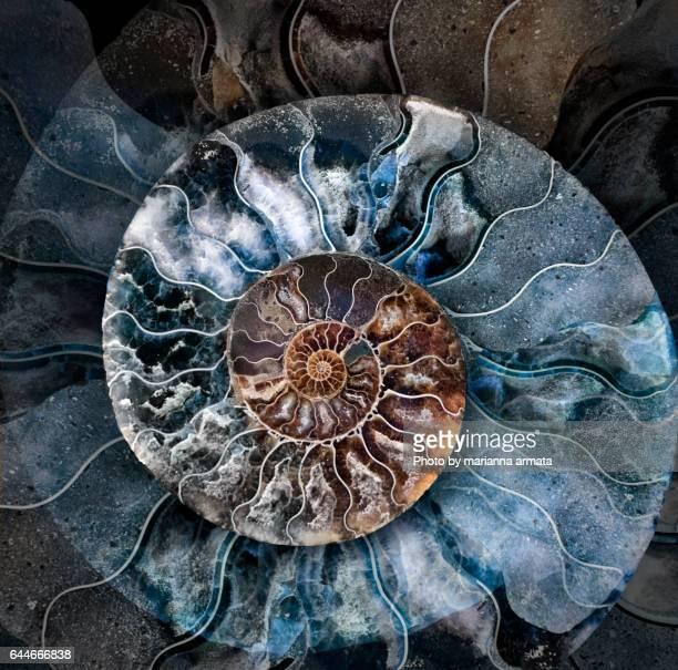 ammonite 1 - fossil stock photos and pictures