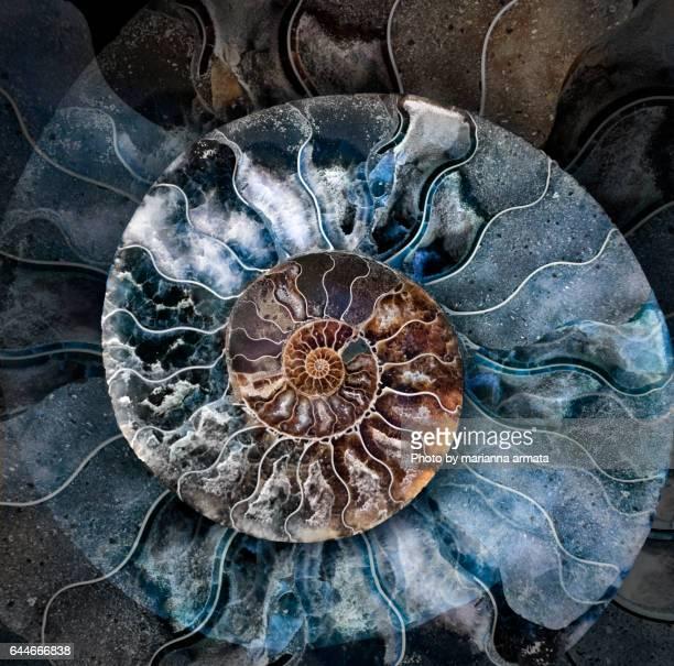 ammonite 1 - fossil fotografías e imágenes de stock
