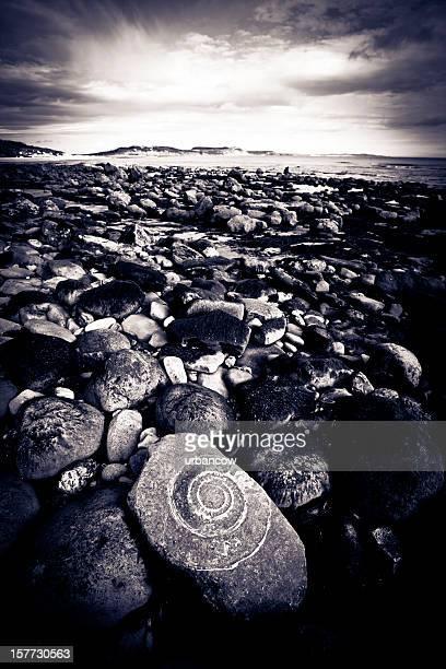 Ammonite in rock