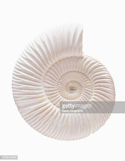 ammonite - ammonite stock photos and pictures
