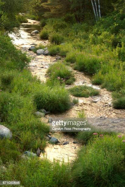 ammonoosuc river - carolyn ross stock pictures, royalty-free photos & images