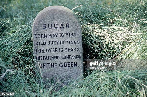 Among The Corgis' Graves In The Grounds Of Sandringham In Norfolk Is The Grave Of Sugar, One Of The Queen's Favourite Dogs, circa 1985.