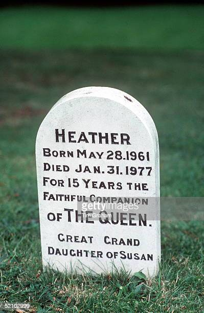Among The Corgis' Graves In The Grounds Of Sandringham In Norfolk Is The Grave Of Heather, One Of The Queen's Favourite Dogs, circa 1985.
