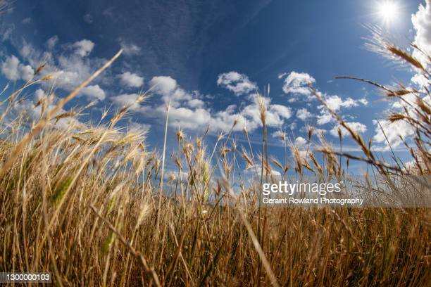 amongst nature - crop stock pictures, royalty-free photos & images