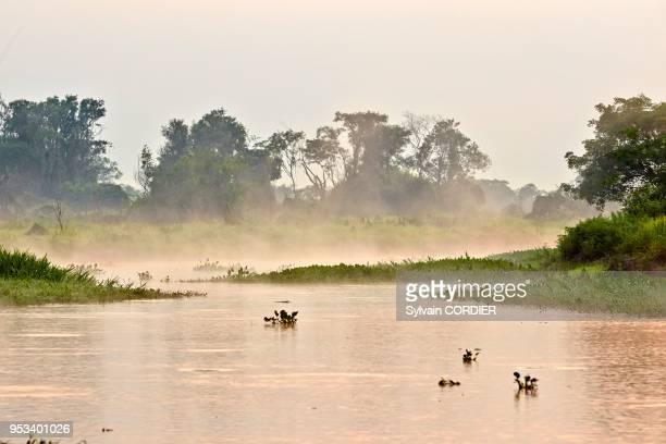 Amérique du Sud Brésil Mato Grosso région du Pantanal fleuve Rio Cuiaba Black channel lever de soleil