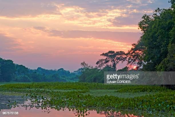 8fa16174a498f2 Amérique du Sud Brésil Mato Grosso région du Pantanal fleuve Rio Cuiaba  Black channel lever de