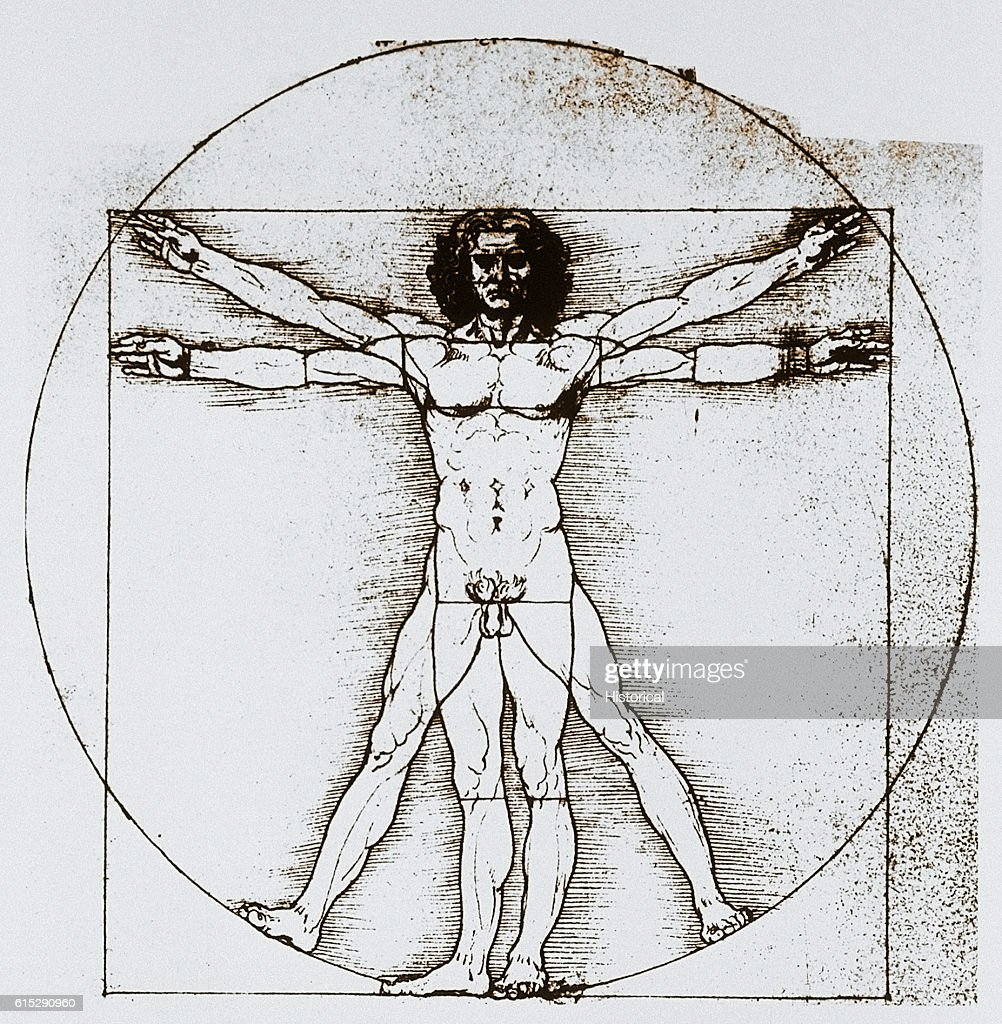 Diagram of Human Proportions Based on Vitruvian Man by Leonardo da ...