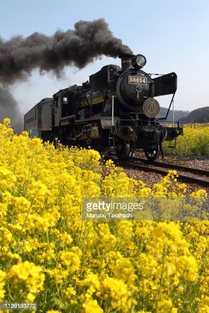 An 8620 Steam Locomotive 'SL Hitoyoshi' runs between Watari and Naraguchi stations on March 28 2011 in Kuma Kumamoto Japan