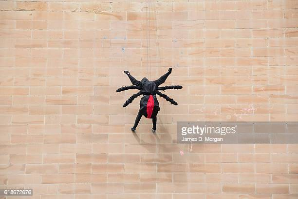An abseiling spider descends the outside wall at the Australian Museum on October 28 2016 in Sydney Australia The event was to celebrate the...