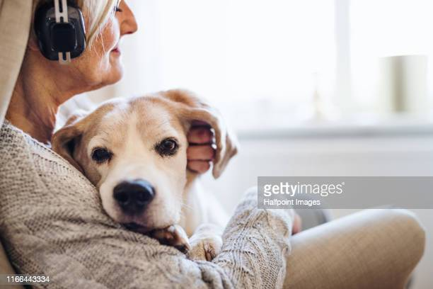 an active senior woman with a dog and headphones at home, listening to music. - grupo mediano de animales imagens e fotografias de stock