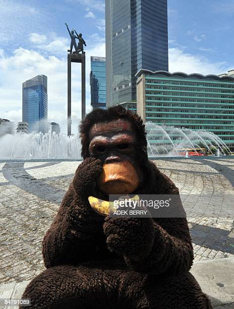 An activist from Centre for Orangutan and wearing an Orangutan costume sits along a round about as they give bananas to motorists on Valentine's Day...
