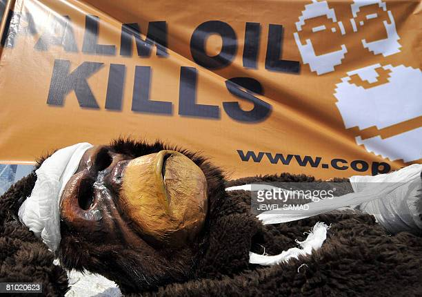 An activist of the Centre for Orangutan Protection dressed like an injured orangutan lays on the ground as others display a banner during a...