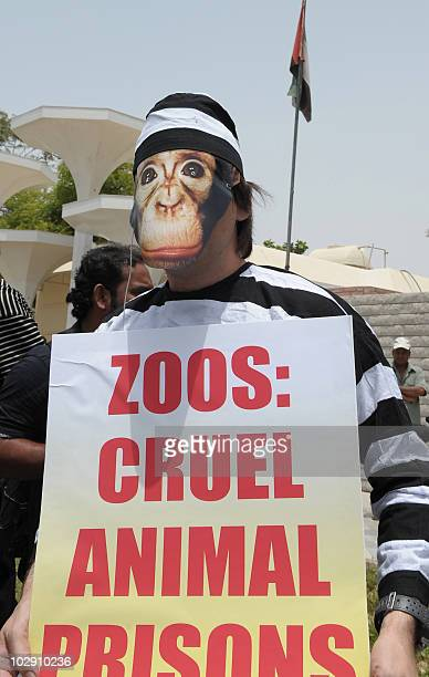 An activist of the People for the Ethical Treatment of Animals , wearing a prison suit and a monkey mask, holds a placard outside the Dubai Zoo on...