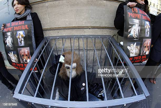 An activist protesting against vivisection dressed up as a monkey demonstrates in a cage in front of an Air France KLM agency near the Opera Garnier...