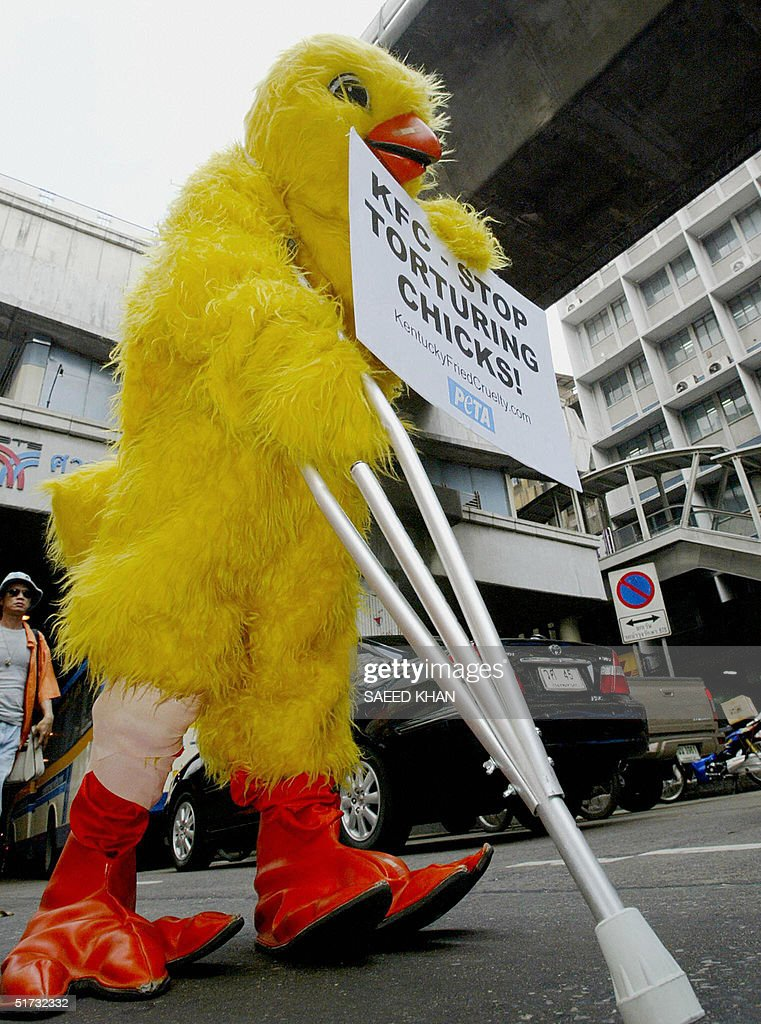 An activist wearing a chicken costume cr : News Photo