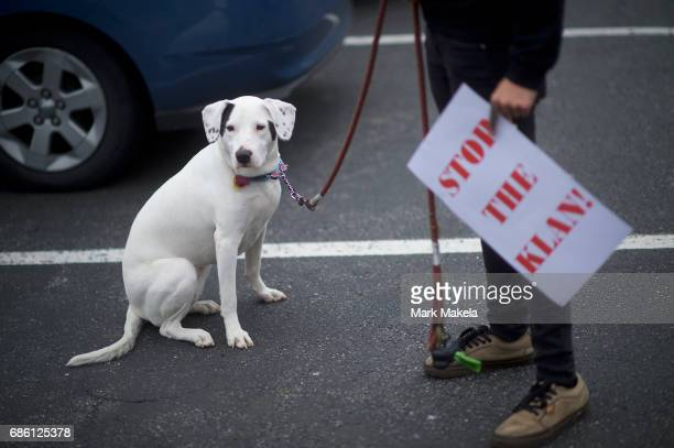 An activist with a puppy prepares to affix her car with a protest poster against the Klu Klux Klan before driving in a caravan through the...