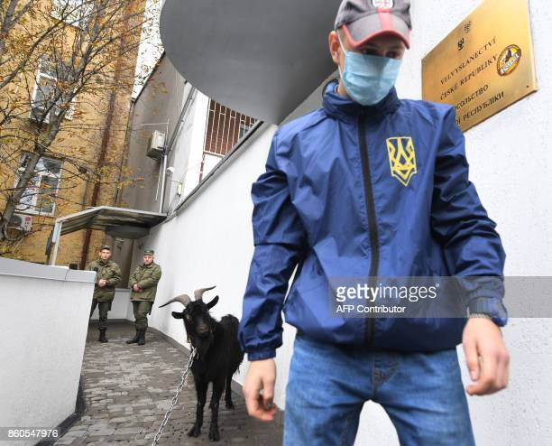 An activists of the Ukrainian farright National Corpus Ukrainian party tethers a goat outside the Czech Embassy during a protest in Kiev on October...