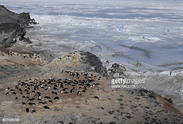 An Adelie penguin colony beside the frozen Ross Sea area near McMurdo Station Antarctica on November 11 2016 Kerry is visiting the station as he...