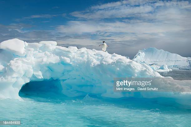 an adelie penguin on top of an iceberg in the antarctic seas. - adelie penguin stock pictures, royalty-free photos & images