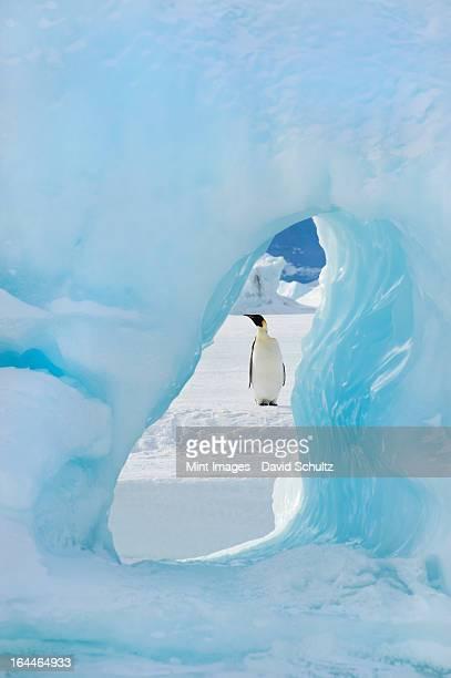 Un adulto pingüino emperador pie en el hielo en la nieve