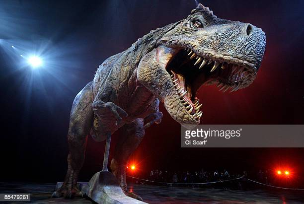 An adult Tyrannosaurs Rex robotic dinosaur performs in the O2 arena ahead of the forthcoming European leg of the live show 'Walking With Dinosaurs'...