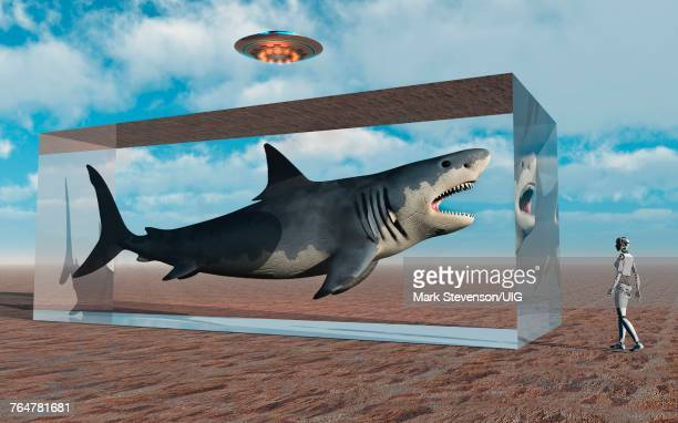 an advanced civilization capturing a megalodon. - megalodon stock photos and pictures