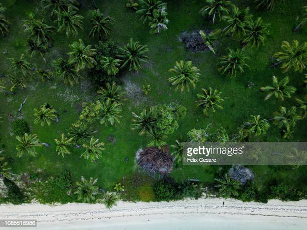 an aerial beach shot of a tropical beach in fiji islands - pacific islands stock pictures, royalty-free photos & images