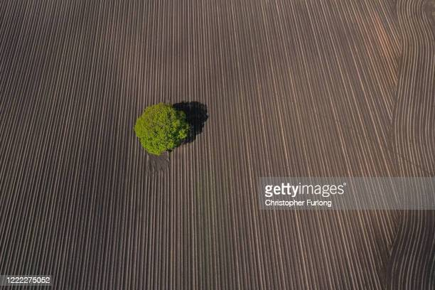 An aerial drone photo of a tree sitting in the middle of ploughed field on May 01, 2020 in Warrington, England. Agricultural operations in the UK...