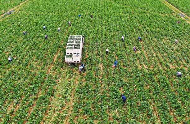 FL: Essential Farm Workers Continue Work As Florida Agriculture Industry Struggles During Coronavirus Pandemic