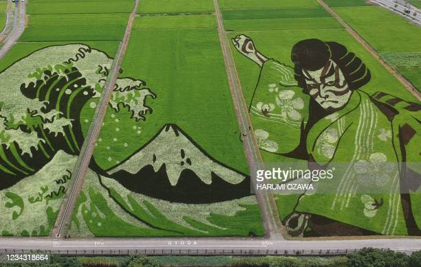 An aerial photograph shows artwork depicting Japans Ukiyoe and Kabuki theatrical actor, illustrated in fields using various shades of rice plants in...