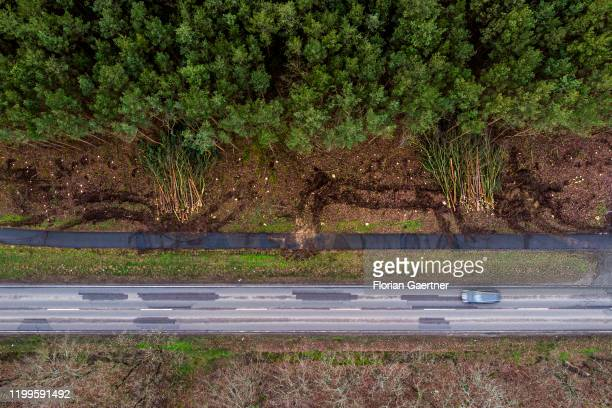 An aerial photograph shows deforested roadsides on February 07 2020 in Saarmund Germany