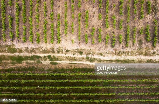 An aerial picture taken on May 30 2018 shows a vineyard in Vertou outside Nantes western France