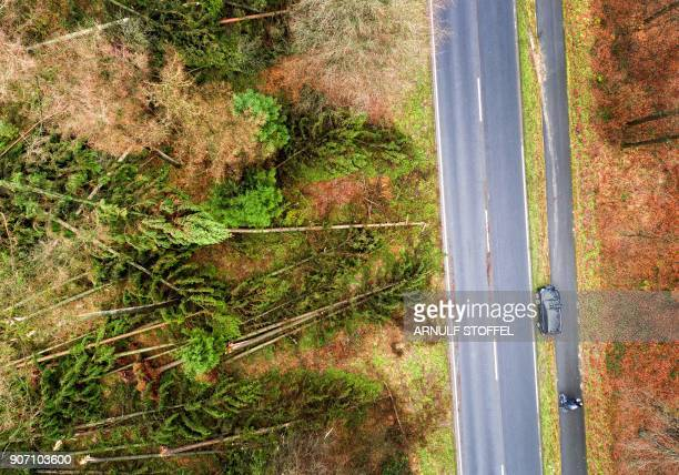 An aerial picture taken with a drone on January 19 2018 shows a cyclist driving past fallen trees along a road near the German town of Kleve western...