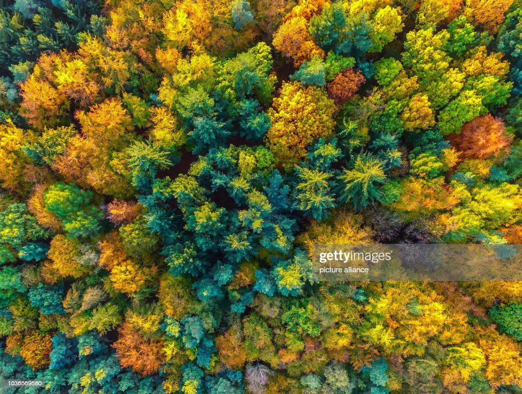 Fall colors Pictures | Getty Images