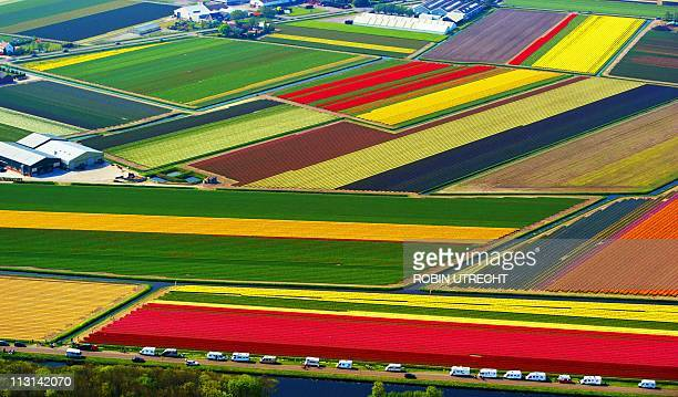 An aerial shot shows a colourful field of flower bulbs in Lisse, on April 24, 2011. Tourists traveling in mobile homes can be seen parked on the side...